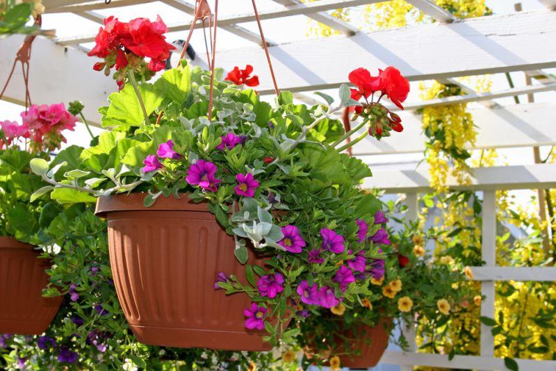 pergola hanging pots